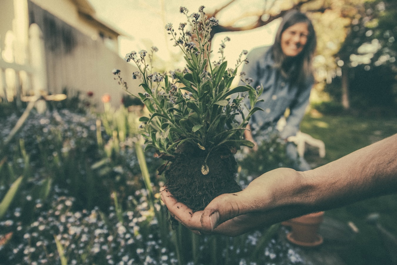 Hand holding uprooted plant with woman smiling in the background